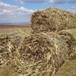 Baloti biomasa din salcie energetica