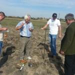 Recoltare analiza sol pentru cultura de salcie energetica